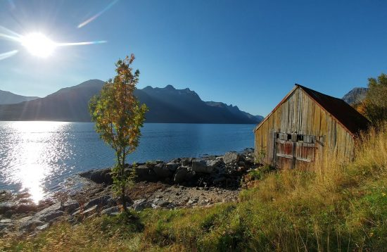 Fishing Tour with Arctic Booking, from Ersfjord